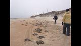 U.S. Coast Guard saves hundreds of sea turtles