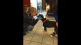 Stolen Oakland dog returned to shelter