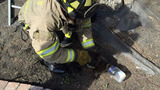 Photos show Cosumnes firefighters rescue cat stuck in tree with its head stuck in a jar